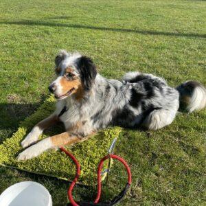 Jenice Harrington Boardmember dog