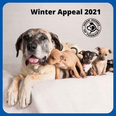 Winter Appeal 2021 Launch Press Release