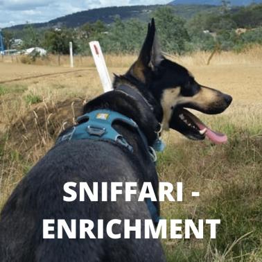 SNIFFARI - ENRICHMENT