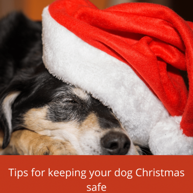 Tips for keeping your dog safe (2)